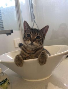 Scuse me that's not your bed! Kittens Cutest, Cute Cats, Kitty, Pets, Kawaii Cat, Animals And Pets, Kitten, Kitty Cats, Cat