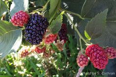 Fruit Trees & Small Fruits   - Articles & Resources from Nebraska Extension in Lancaster County
