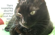 OccupyForLife: Maya, pisica mea neagra/ Maya , my black cat My Black, Maya, Animals, Animales, Animaux, Animal Memes, Animal, Maya Civilization, Animais