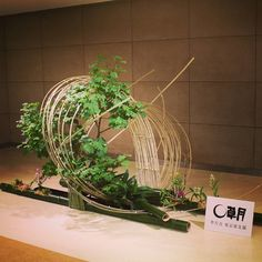 Beautiful Flower Arrangements, Beautiful Flowers, Ikebana Sogetsu, Ikebana Arrangements, Bamboo Tree, Plant Hanger, Wood Art, Wedding Flowers, Floral Design