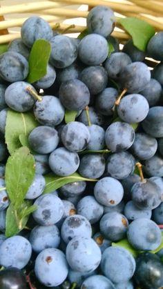 Bylinkové likéry a vína | Bylinky pro radost - Part 6