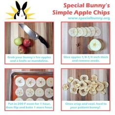 Homemade treats for your pet rabbit- Are you looking to try something different? treats for your pet rabbit – Apple Chips Bunny Cages, Rabbit Cages, Rabbit Toys, Pet Rabbit, Homemade Rabbit Treats, Diy Pour Chien, Diy Bunny Toys, Diy Toys For Hamsters, Diy Toys For Rabbits
