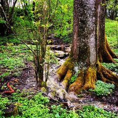Lovely nature  Glentleiten Bavaria