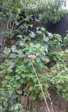 Mini orquidea rosa
