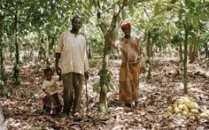 A cocoa farmer with his family at the village of Bipoah in west Ghana.