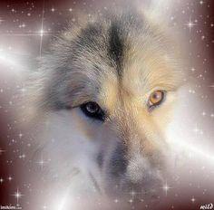 Spirit Animal Totem, Animal Totems, Wolf Husky, Wolf Images, Wolf Spirit, Wilderness, Paths, Native American, Illustration Art
