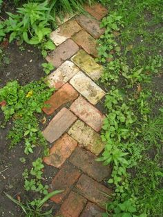 Reused brick path, beautiful solution