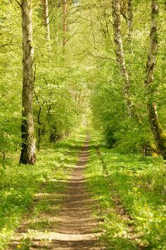 "tulipnight: ""Forest path by Bastian Kienitz """