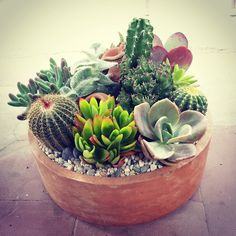 Cacti and succulents.