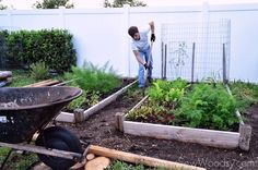 Hottest Snap Shots Vegetable Garden edging Suggestions In recent weeks, the rapi… - Modern