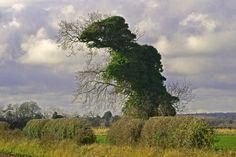 T. Rex tree near Norwich, England : Gewachsenes Grauen: Dinosaurierbaum in Norfolk