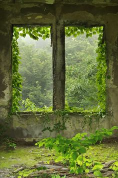 What if part of our secret garden wall had a window with screens to keep deer out, but view of forest beyond.