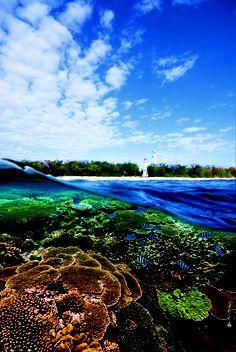 Let's go scuba diving :)