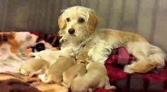 In 15 minutes, the lives of 15 dogs were saved. Not necessarily cats but just as cute