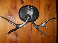 Silver on Black Large Whitetail 7 point buck by patscraftingagain, $87.00