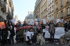 """Samedi 12 mars 2016, le Collectif citoyen """"Stop au massacre des loups, nous devons agir"""" a organisé une manifestation à Paris POUR le Loup. Trois-cents personnes ont défilé dans le calme et la bonne humeur, ce qui change des maigres défilés des anti-loups,..."""