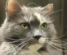 Bettina is a friendly, outgoing girl with  gorgeous spattered grey coat.  She was rescued from an inner city, overcrowded shelter nearby.  Bettina is available for adoption now!
