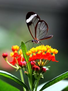 ●❥ʜᴀᴅᴀᴄᴀʀᴏʟɪɴᴀ❥● Most Beautiful Butterfly, Cool Photos, Amazing Photos, Butterfly Photos, Moth, Wings, Heavenly, Favorite Things, Colour