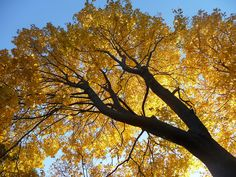 Fall is here - on R. C. Kelley Street in Peabody neighborhood. DiscoverPeabody.com.