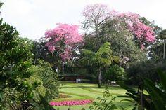Cypress Gardens, pink trees
