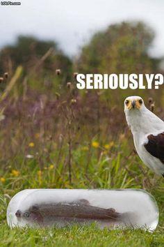 Funny Bird Photo: Bird is not amused