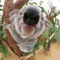 Um pandinha muito fofo