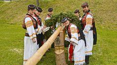 60 minút: Chlapci z FS Očovan po očistení stromu pripevňujú na jeho vrch veniec zo smrekových konárov a fľašku pálenky.  | Nový Čas