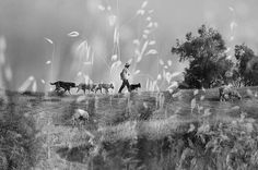 Black & White Art Surreal Photograph of a Man and His Dogs