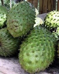La annona muricata, nombre científico de la guanabana, es una fruta tropical que aporta muchos beneficios al organismo. Los efectos anticancerígenos de la guanabana han sido muy difundidos, sin embargo, no son estas sus únicas propiedades medicinales. http://distribuidoradefrutasramon.blogspot.com/p/la-guanabana.html