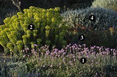 1 : Centaurea bella 2 : Euphorbia characias subsp. wulfenii 3 : Euphorbia rigida 4 : Ballota acetabulosa