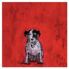The Art Group Small dog Red Canvas art . This canvas art features a painting by Sam Toft featuring a black and white dog on a beautiful bright red background. Canvas art by The Art Group