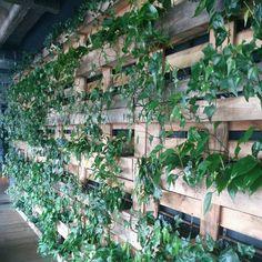 #diy  отличная идея для посадки растений использование поддонов они же евро палетки! Все очень просто и доступно экспериментируют пробуйте дизайн вокруг нас. #greenliving #urbangardening #interiordesign #designintetiores #design #sustainable #natural #organic #nachhaltig #устойчивоеразвитие #садполисад #балкон #терасса #зеленьзеленая #17komnat
