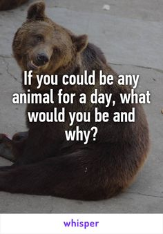"""Someone posted a whisper, which reads """"If you could be any animal for a day, what would you be and why? Facebook Group Games, Facebook Party, Facebook Engagement Posts, Social Media Engagement, Social Media Games, Social Media Content, Body Shop At Home, The Body Shop, Facebook Questions"""