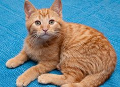 Orange tabby cat 'Frankie' missing from 49th and Hazel | West Philly Local