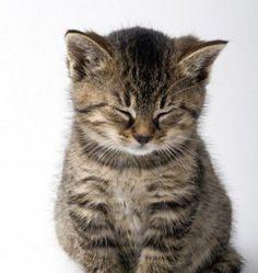 Sleepy :)