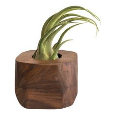 """Few Bits - Faceted Succulent Planter, Walnut - This planter is made from blocks of walnut or ash laminated together and then faceted. Hand rubbed natural oil finish. Cork feet on the bottom to protect your tabletop or shelf. I include a glass holder and rocks with each order. Just add a succulent and you're good to go! Also looks great with a large Tillandsia.  Planter measures 3 1/2 tall, and between 4"""" and 5"""" in diameter."""
