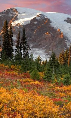 Autumn - Mount Rainier National Park, Washington
