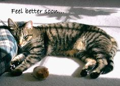 Feel better soon card / Get well card - Cat resting head on pillow - Photo greeting card by Belvidesigns
