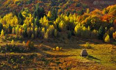 Autumn colors in Apuseni Mountains 8 by adypetrisor on DeviantArt Timeline Photos, Art And Architecture, Romania, Adventure Travel, The Good Place, Vineyard, Deviantart, Autumn, Mountains