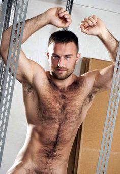 peloso orso gay porno gay Peloso muscolo porno