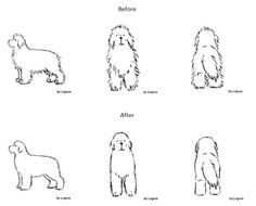 Priceless tips on how to groom and trim your Newfoundland - General Trimming