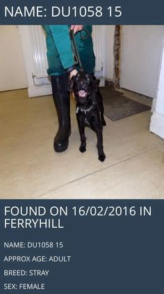 Found in Ferryhill!Please help find this little girls owners, she was found on the 16th February.