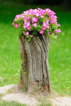 Tree stumps need not be uprooted and thrown away. Trees which have been cut down with the stump left behind can be easily recycled and reused. Well tree stump in garden works in. Tree Stump Decor, Tree Stump Planter, Tree Stumps, Tree Logs, Garden Trees, Garden Planters, Garden Art, Garden Oasis, Container Garden