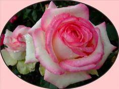 Beautiful Blooms 141 (Ode To Joy)