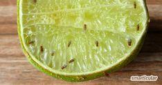 Fruchtfliegen bekämpfen & mit Hausmitteln loswerden Lime, Fruit, Food, Home Remedies, Foods, Cleaning Agent, Limes, Essen, Meals