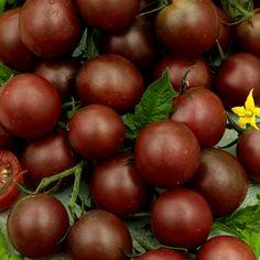 Kirsikkatomaatti Black Cherry - Viherpeukalot