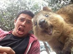 http://distractify.com/avericlements/24-quokkas-that-are-dying-to-show-you-how-happy-they-are-to-see-you/?img=293cf8