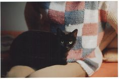 Cat and Sweater.