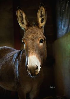 If you wonder what a donkey can eat, you can find all important feeding facts here. Take good care of your donkey with best information. Pretty Horses, Beautiful Horses, Animals Beautiful, Farm Animals, Animals And Pets, Cute Animals, Mini Donkey, The Donkey, Regard Animal