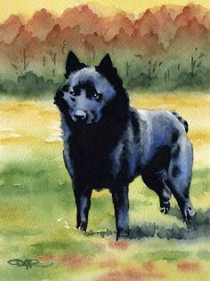 your favorites to revisit it later.       SCHIPPERKE Dog Art Print Signed by Artist DJ Rogers                                  SCHIPPERKE Dog Art Print Signed by Artist DJ Rogers